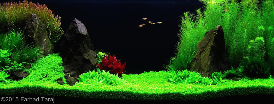 2015 AGA Aquascaping Contest - #464 (With images ...