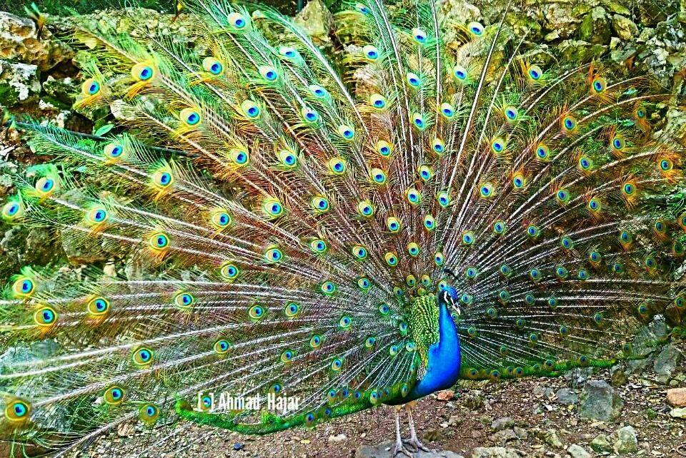 ملك الطيور Blog Blog Page Animals