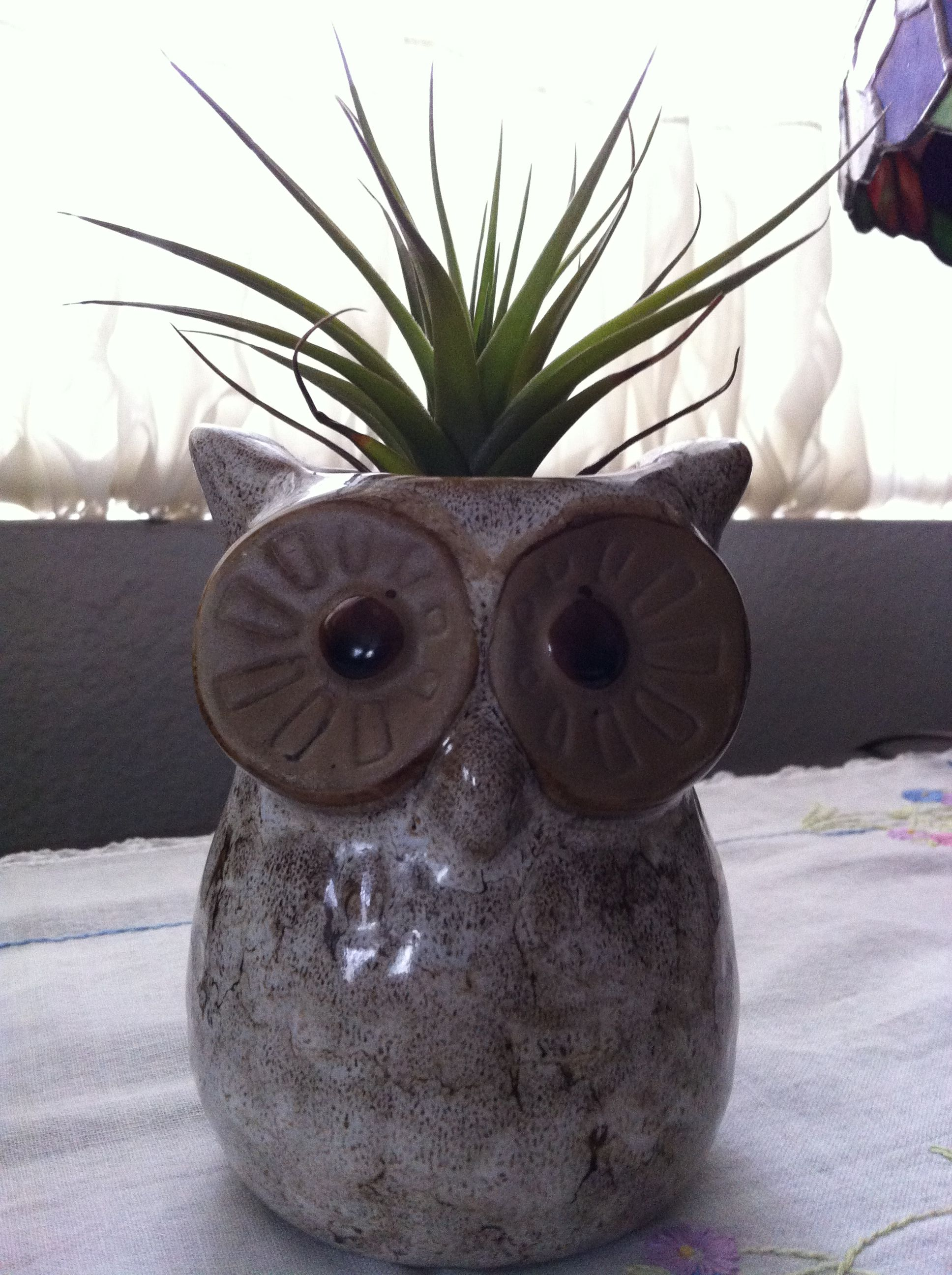 Found This Adorable Ceramic Owl At Marshals  Perfect For