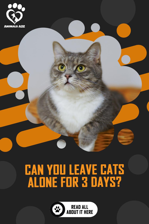 Pin On Cats Kittens Kitties