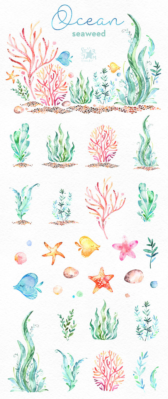 Ocean. Seaweed. Underwater watercolor clip art, water plants, seaware, fishes, starfish, sea, nautic
