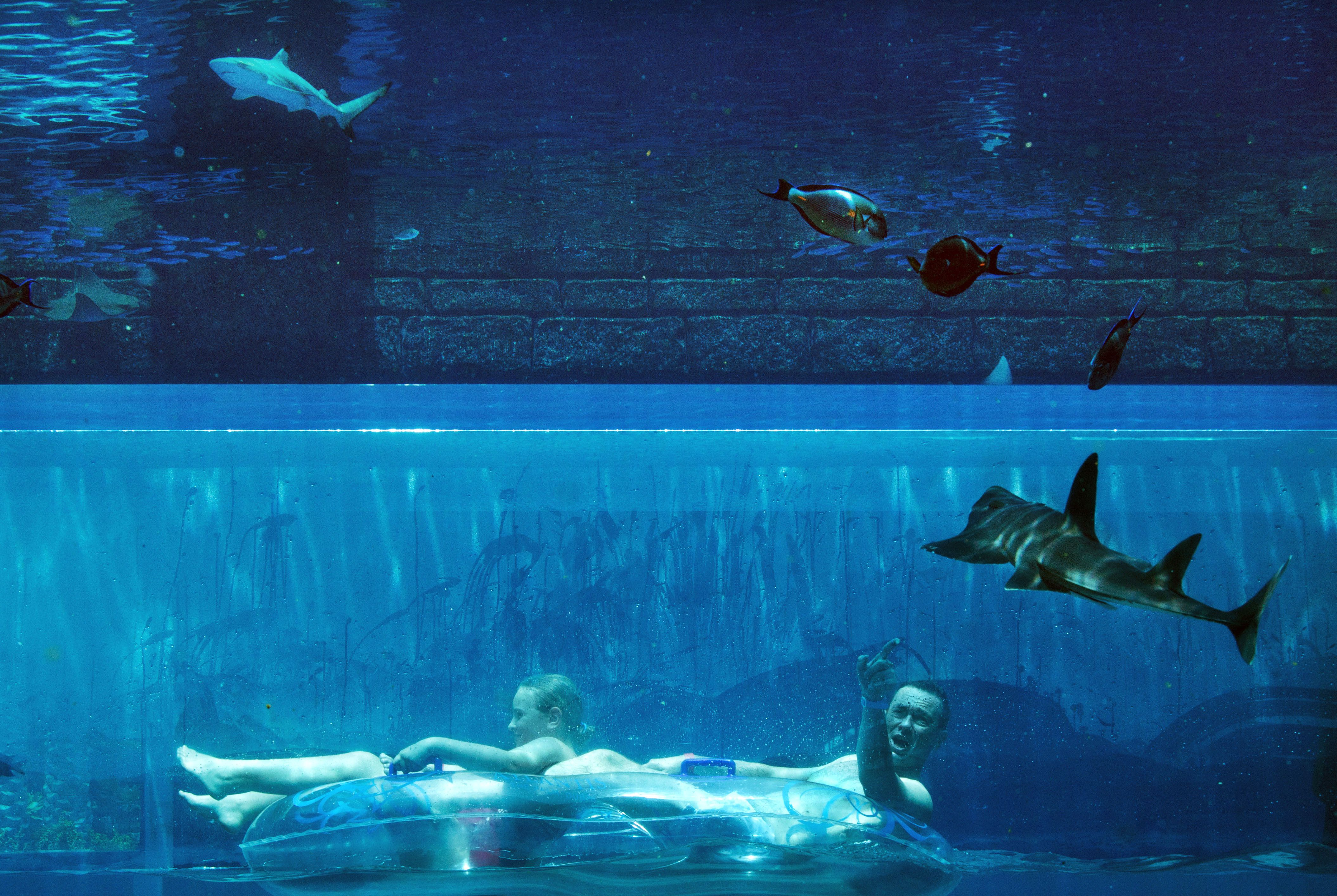 underwater water slide. A Man Points At Shark While He Slides Through An Underwater Tunnel Hotel Water Slide