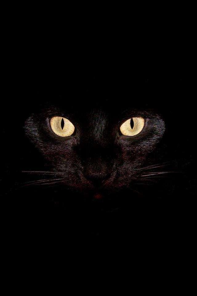 Black Fond D Ecran Chat Yeux De Chat Noir Chat Noir