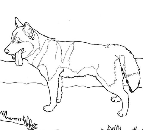 Siberian Husky Dog Coloring Page Husky Siberiano Dibujos De