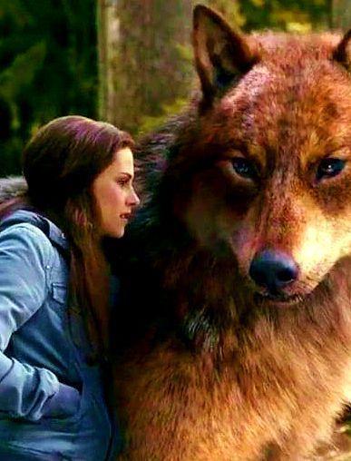 Bella and Jacob 2  | Jacob and Bella | Twilight wolf