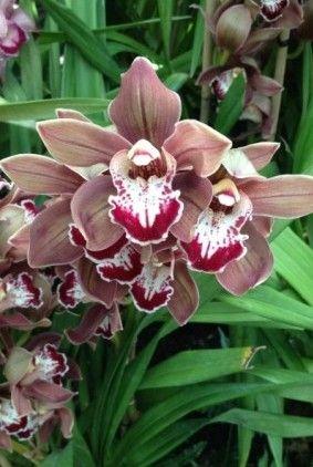 Flower Index Orchids Flowers Winter Photos
