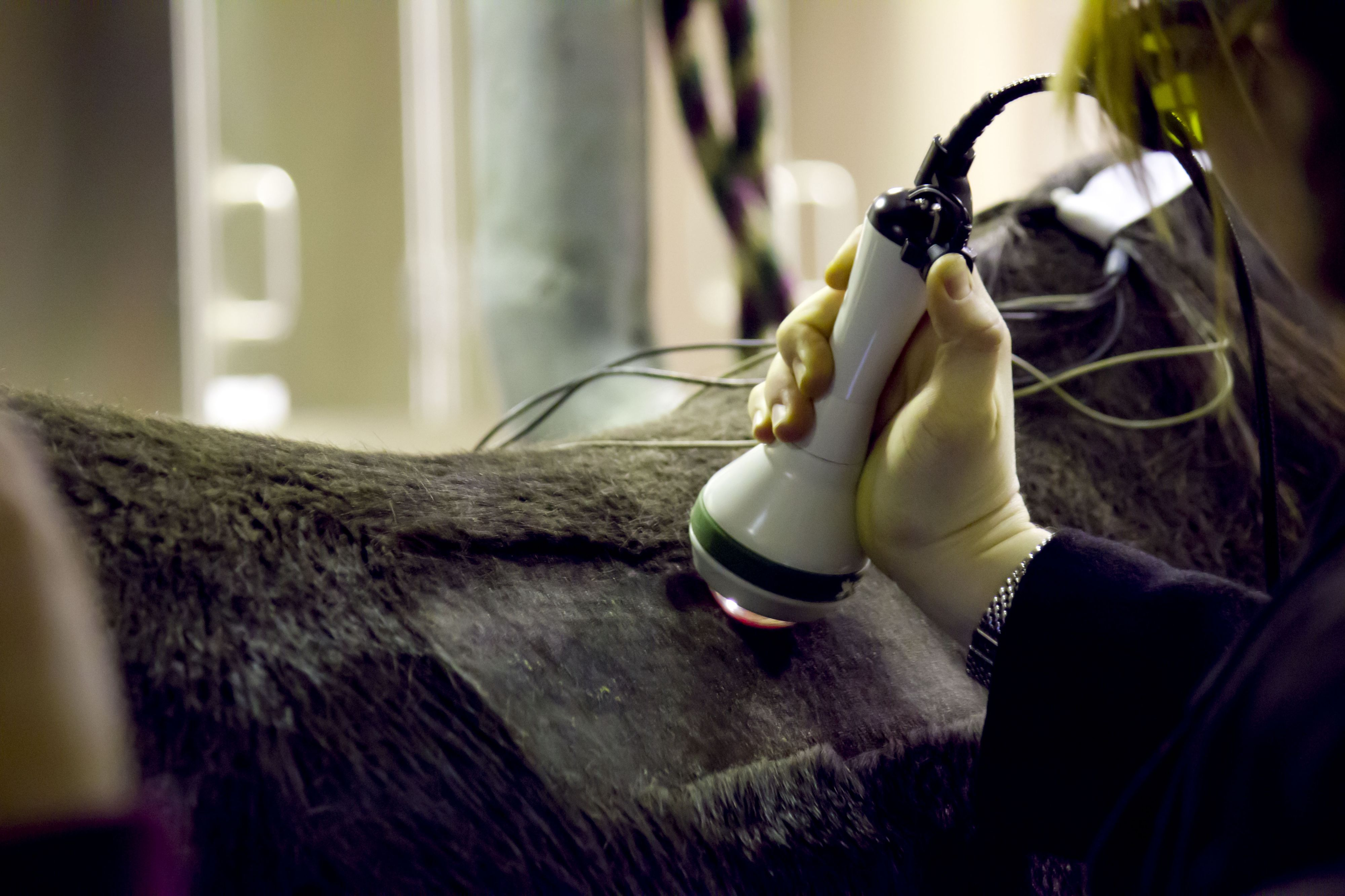 Equine physical therapy - Equine Rehabilitation Certificate Program The University Of Tennessee In Cooperation With Colorado State University Orthopedic Research Center Pinterest