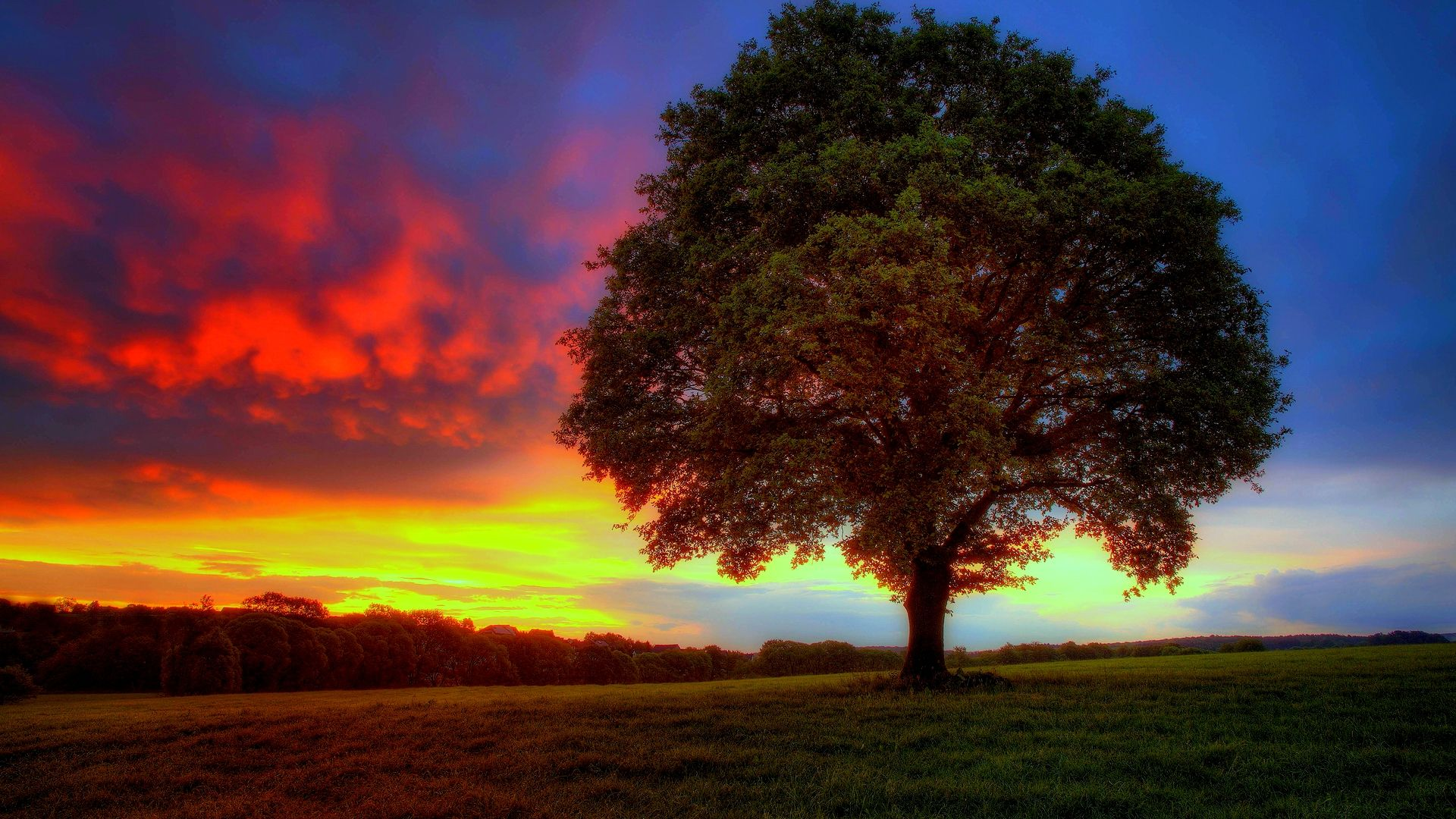 Lonely Tree Wallpapers High Definition Wallpapers Root