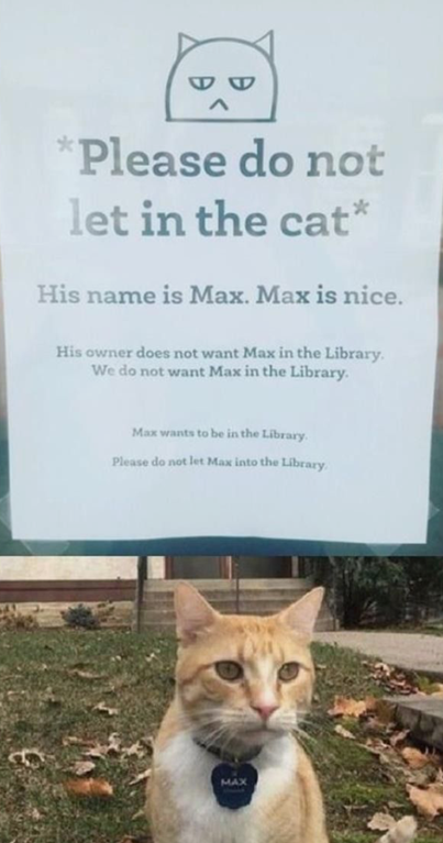 Pin by Aaron Grimm on Felines in 2020 Funny, Funny signs