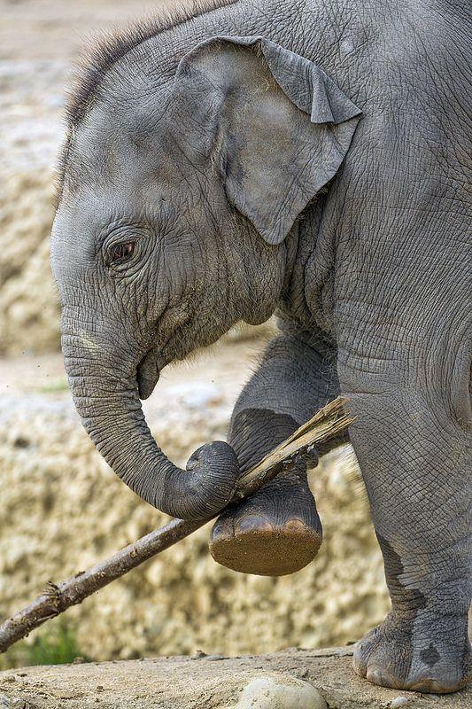 Omysha And The Branch  Love It  Baby Elephant, Elephant -7015