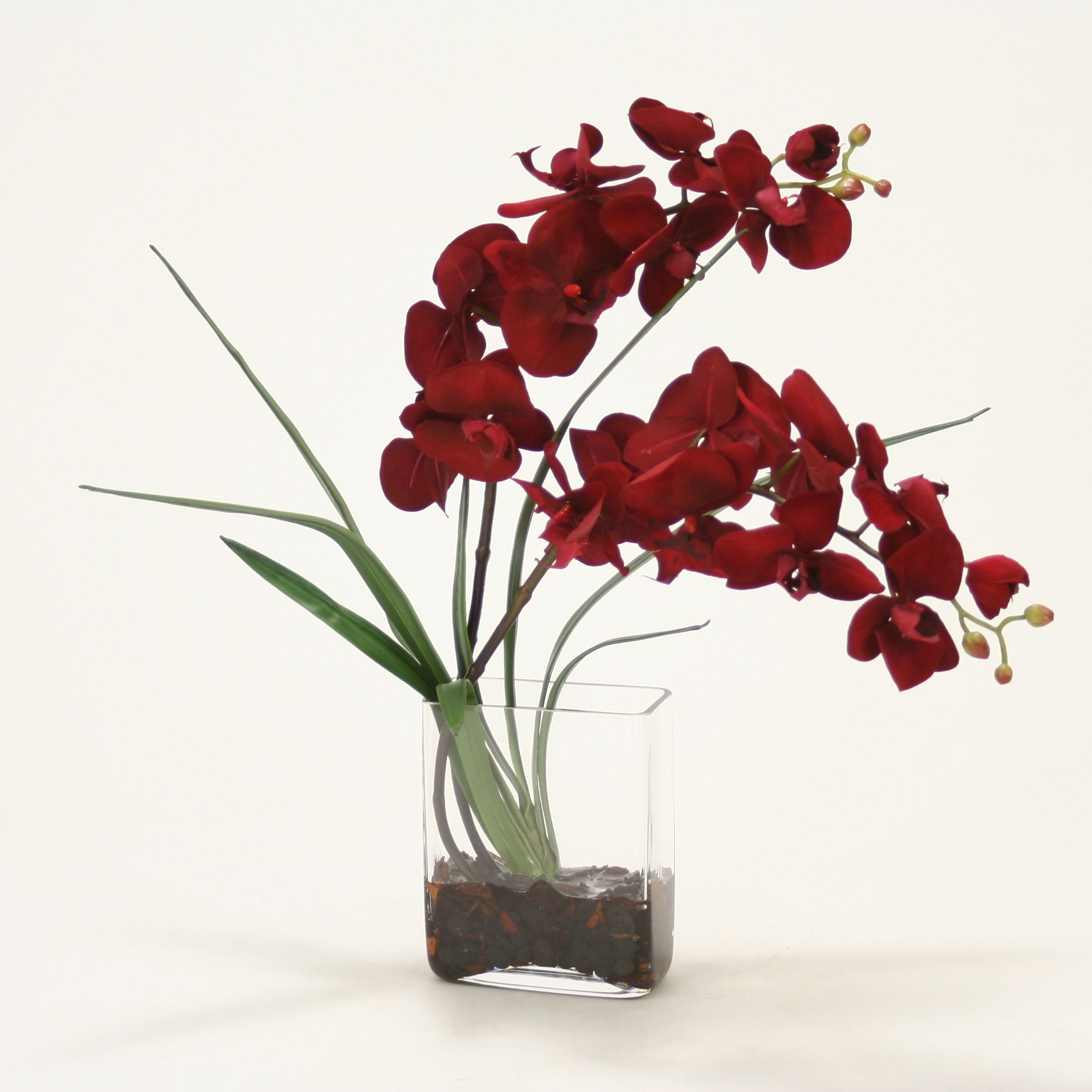 Distinctive Designs Phalaenopsis Orchid In Glass Vase