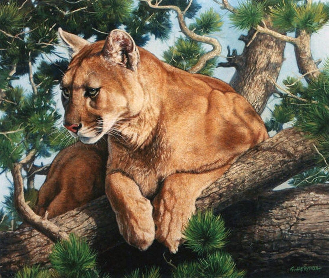 caripe cougar women Art titles starting with: pa massive selection of posters, fine art prints, and more find your favorite artists today.