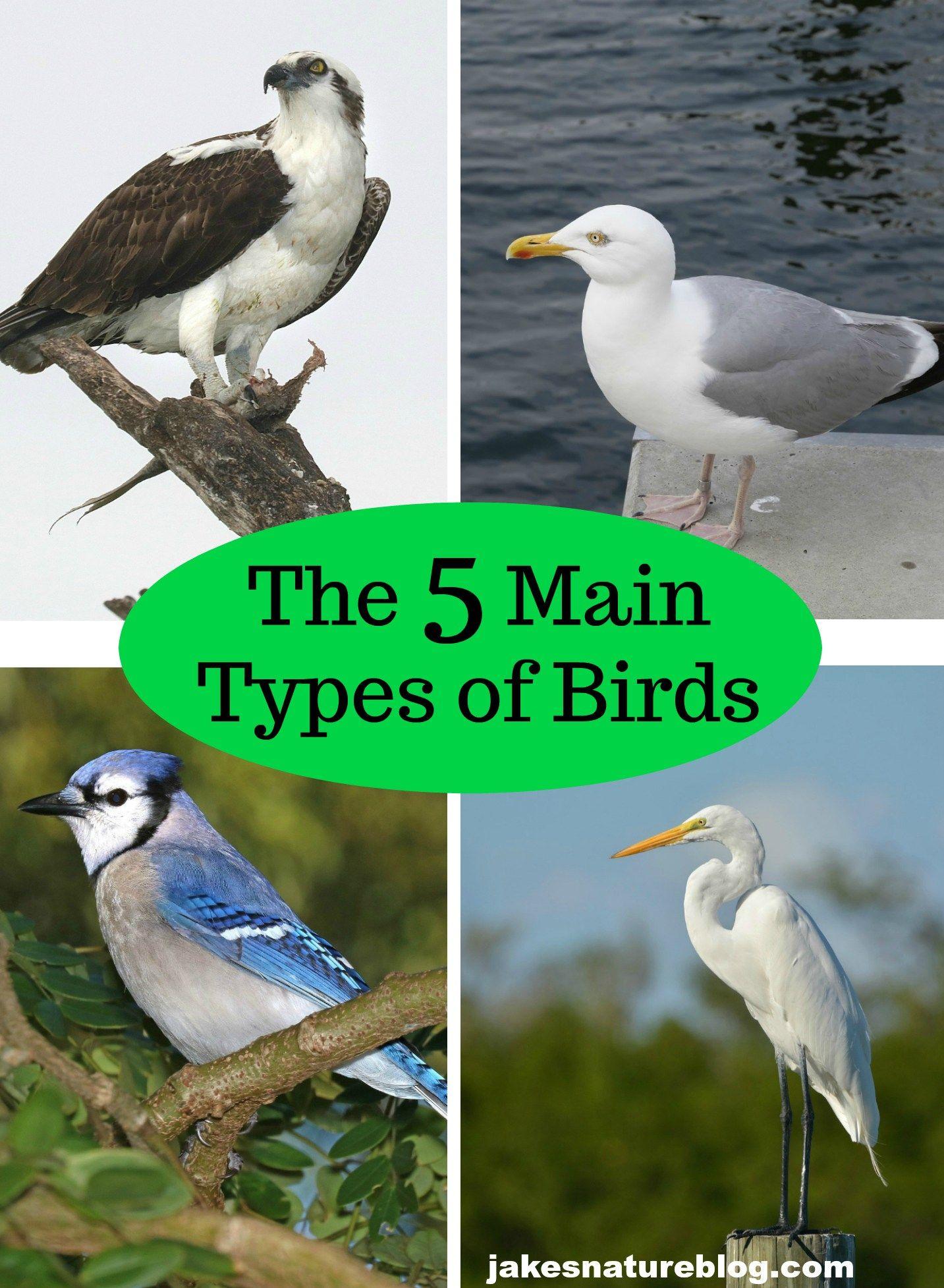 The 5 Main Types Of Birds Tip For Beginner Birders Jake S Nature Blog Birder Birds Maine