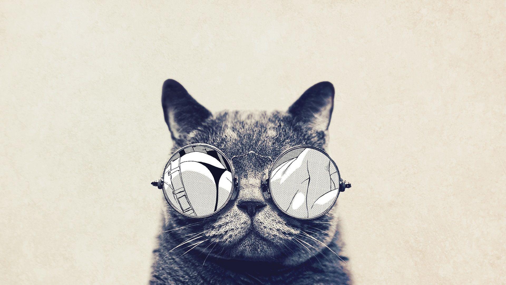 cat tumblr reddit imgur hd wallpaper hd wallpapers love