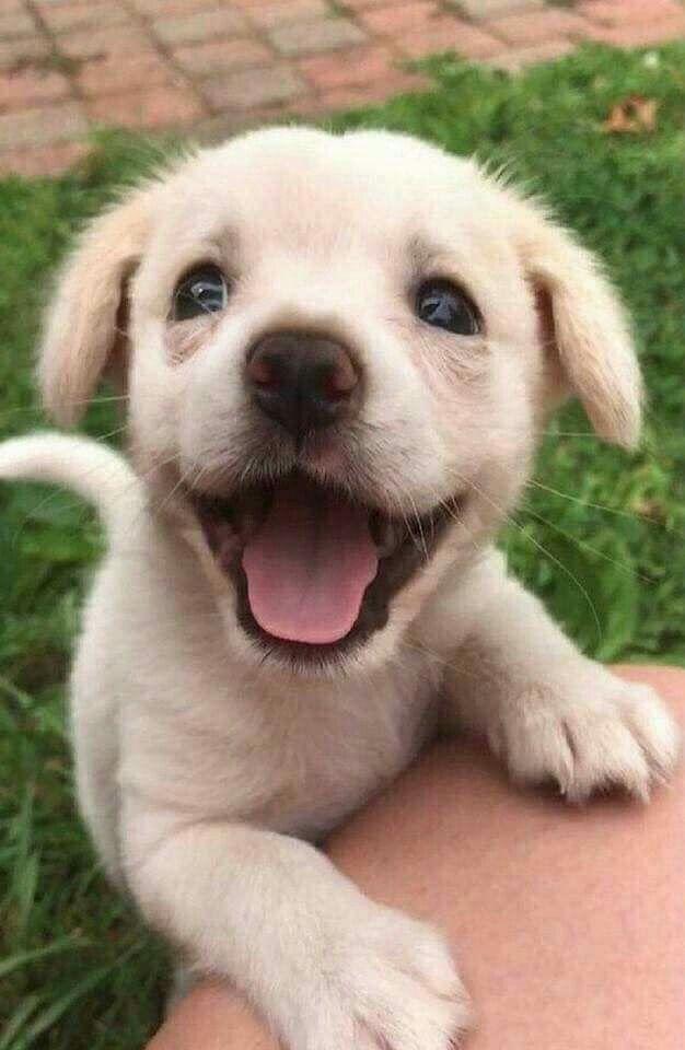 Ghim Của Anna Lena Tren Cute Stuffed Animals Cho Pup động Vật