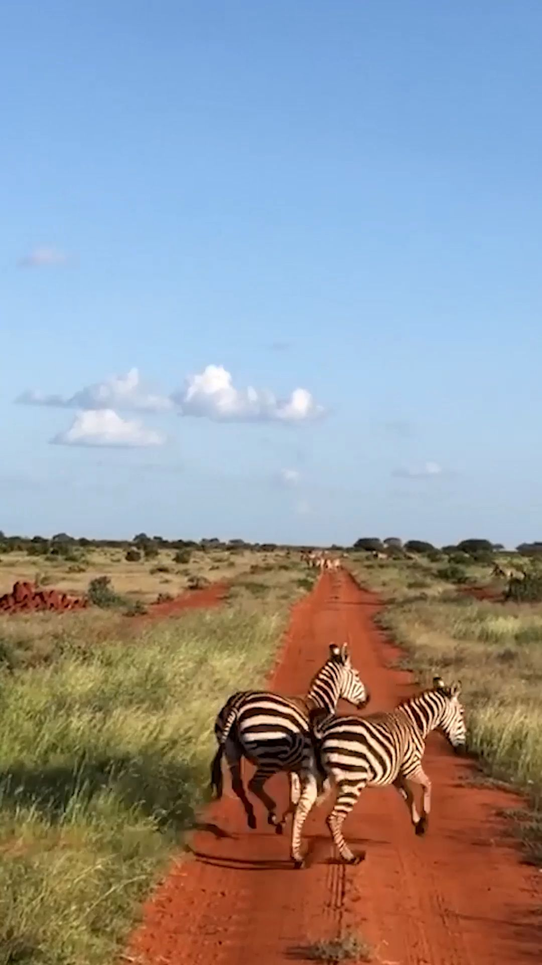 Das Abenteuer Safari in Kenia solltest du keinesfalls verpassen! Aber wie geht man vor bei der Planung? Wo Bucht man? Auf was sollte man achten? Von der Planung ab ins Abenteuer - ich verrate dir wie. #afrika #kenia #safari #reisen #reisetipps #dianibeach #tsavo #tsavoeast