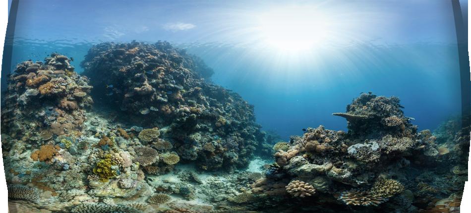 Início - A Global Reef Registro