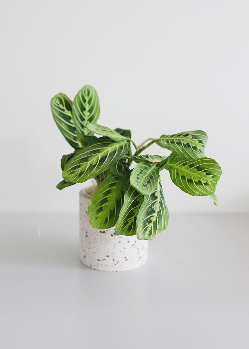 Find trendy vases for your modern home decor, like this white terrazzo flower pot. The embedded marble chips create the colorful speckled look.  Multi - White, Pink, Blue, Rust, and Green 4.5