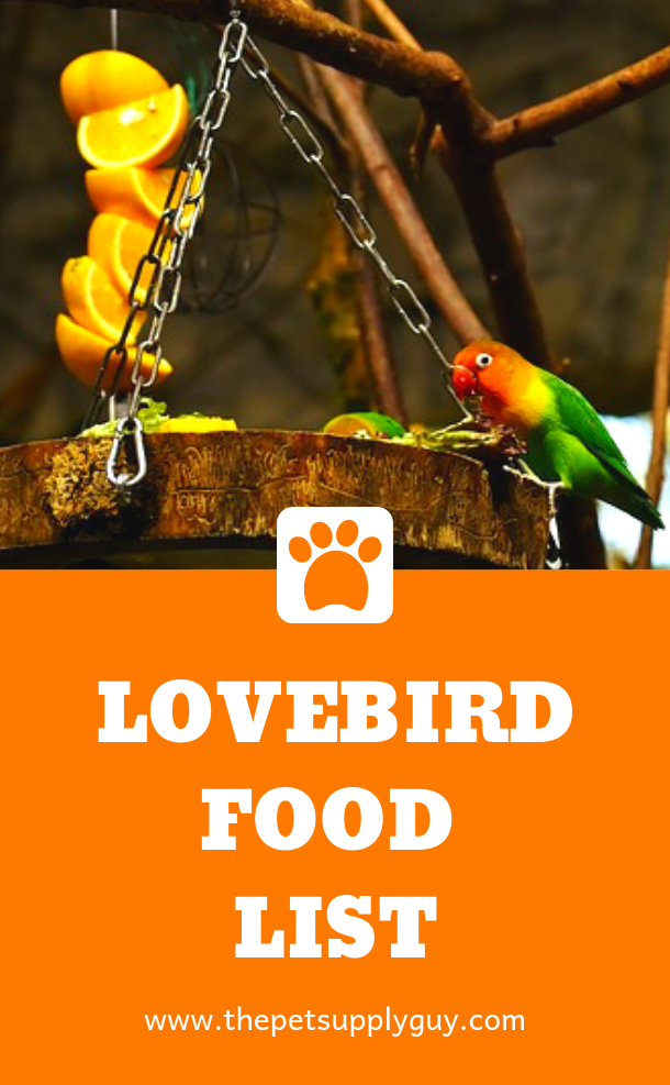 What Lovebirds Eat And Drink