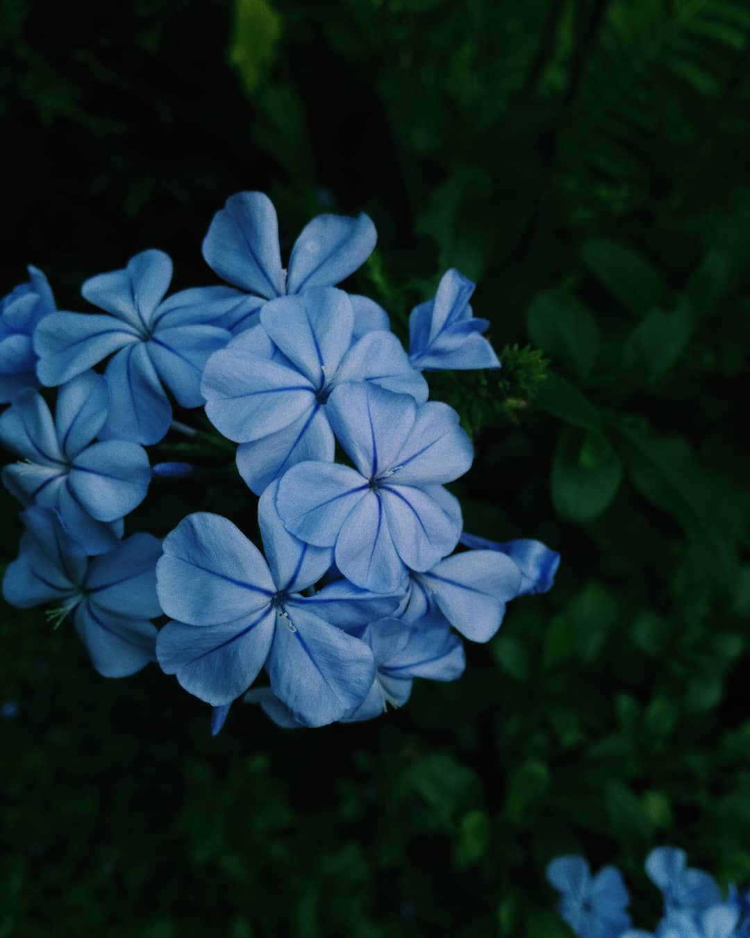[New] The 10 Best Home Decor (with Pictures) -  Wow photo with good quality what happened #photo #camera #flowers #aesthetic #garden #photophabryka #blue #summer #throwback #instapic #instagood #instaphoto