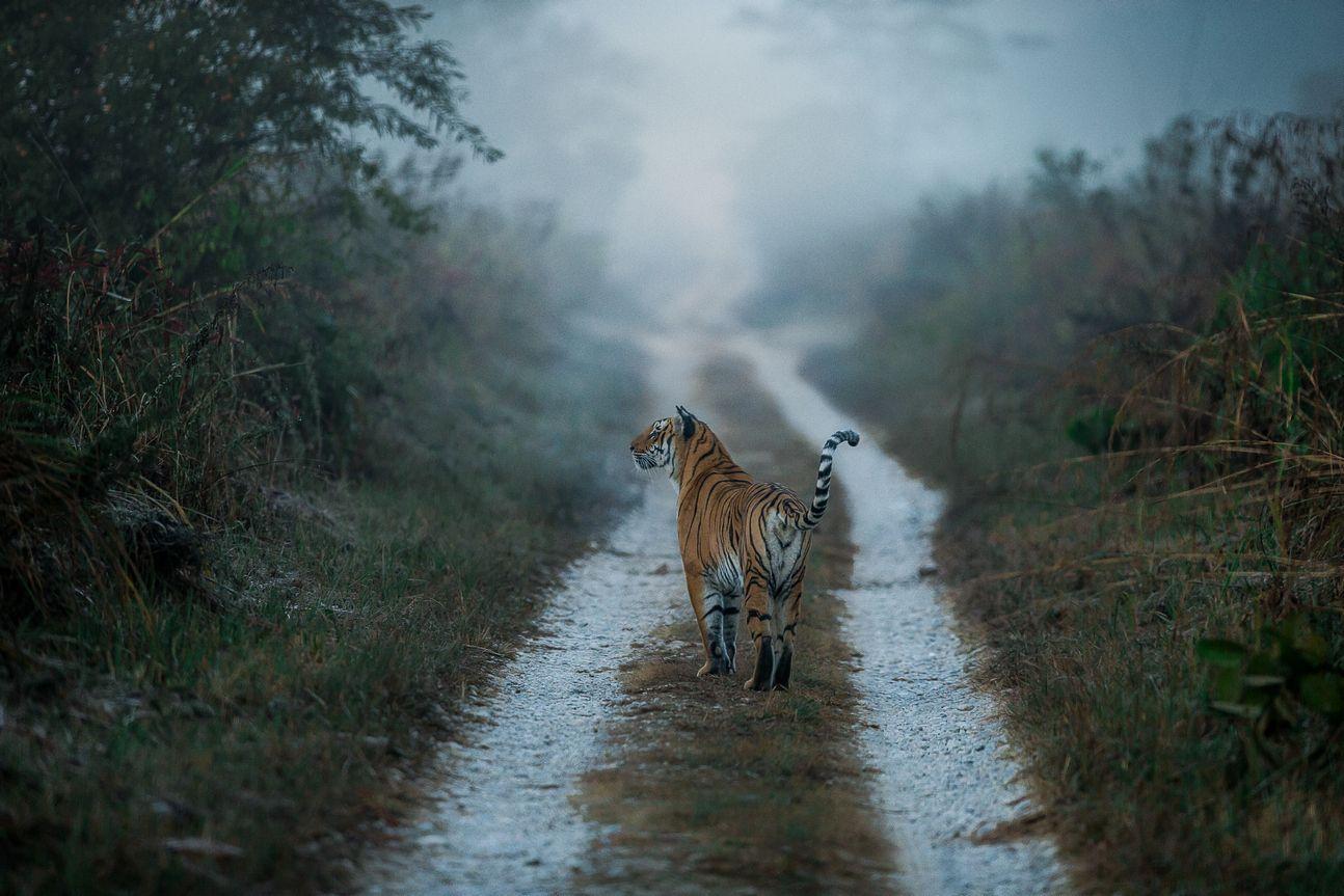 Pin by India Bird Watching on Wildlife Safari Wildlife