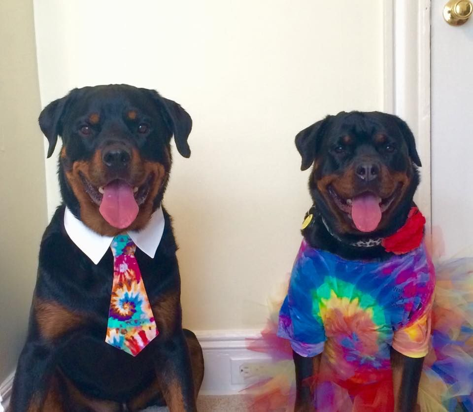 Tye Dye Dog Tie Dog Neck Tie Dog Bow Tie Dog Tie For Big Dogs