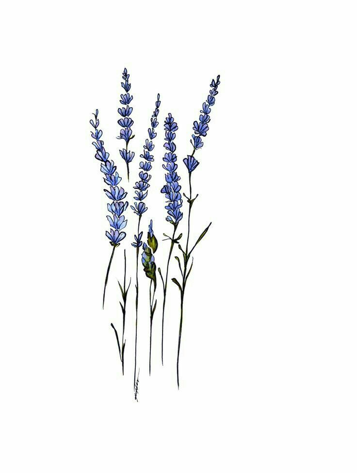 Lavender Sprigs In Flower Language Lavender Means Either Distrust Or Refinement And Grace Lavender Tattoo Tattoos Tattoos With Meaning