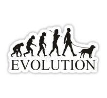 EVOLUTION labrador Sticker