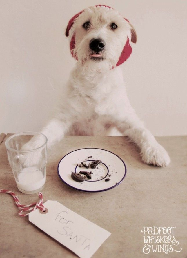 Christmas Cards Ideas For Your Pets Via Brit Co