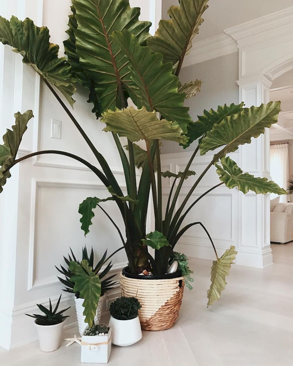 Indoor Apartment Plants: Apartment Indoor Gardening With Tropic Indoor Plants