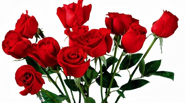 Bunga Mawar Putih Bunga Mawar Merah Untuk Pacar Arti Bunga Mawar