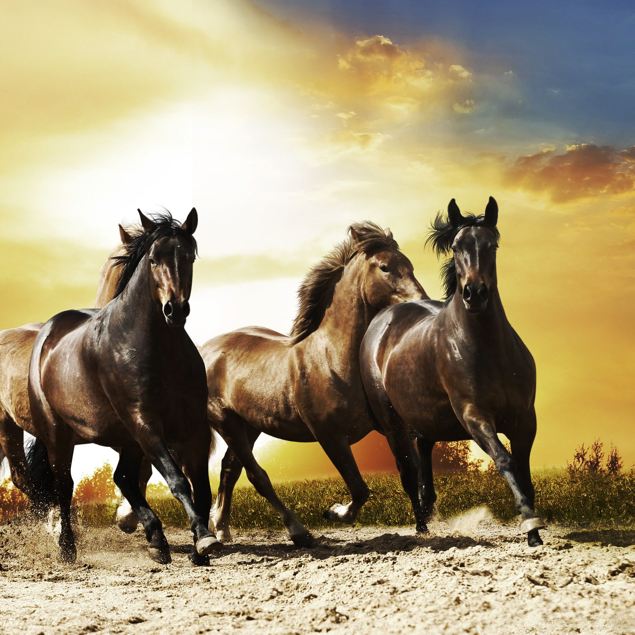 Wonderful Wallpaper Horse National Geographic - c64bdc4783427228427d65275cb9f712  Best Photo Reference_355749.jpg