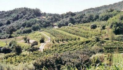 Torreglia, Veneto, Italy  www.visitabanomontegrotto.com