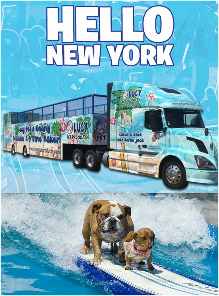 Calling All NYC Surfin' Doggies!!! surfdogs Pets, Doggy
