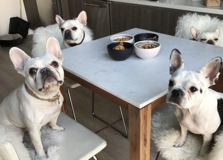 Recipe Salmon Quinoa Homemade Dog Food French Bulldog Puppies