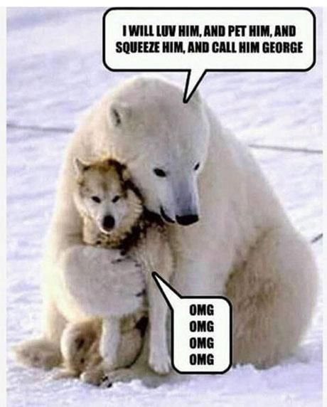 Polar Bear Dog Pet Funny Bears Funny Animal Pictures Cute Animals