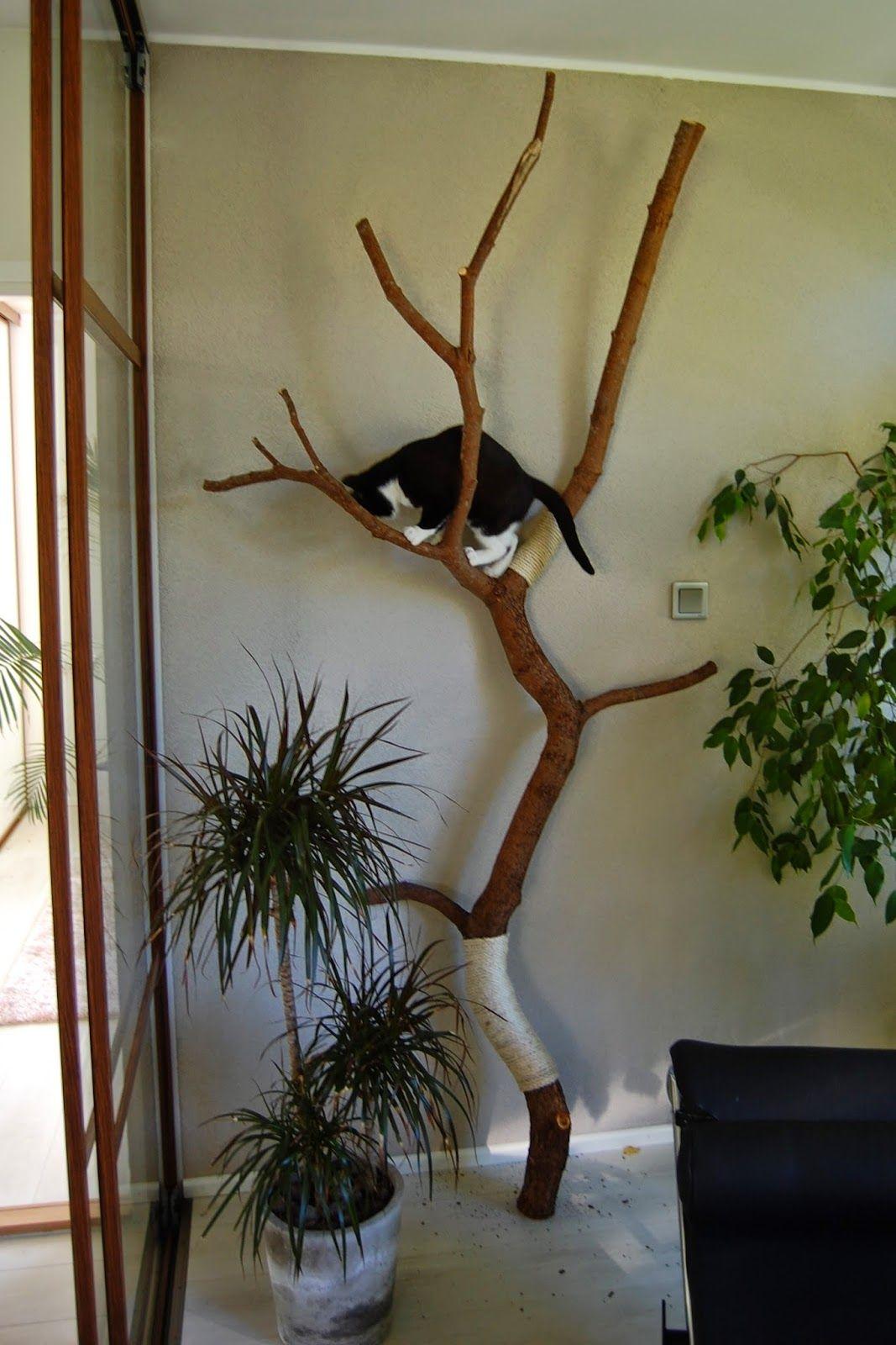 Mattopiiska: Synttärisankari puussa