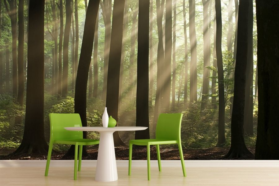 Sunshine Rays Forest Wallpaper Wall Mural