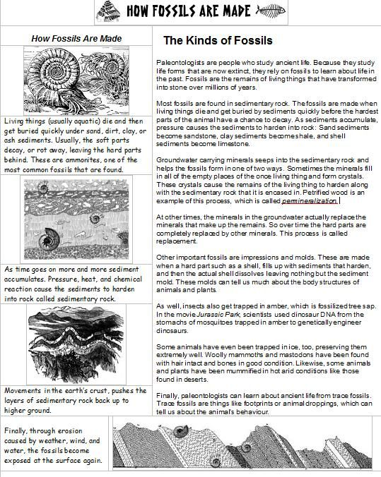 Heres a page of information on how fossils are made – Fossil Worksheet