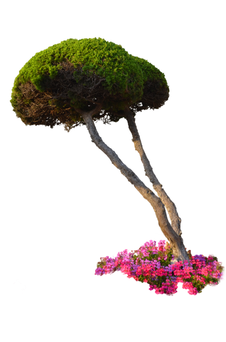 Top view plants 02 2d plant entourage for architecture - 10 Free Plants Flowers Png Images At Dzzyn Com Pine Ball Tree