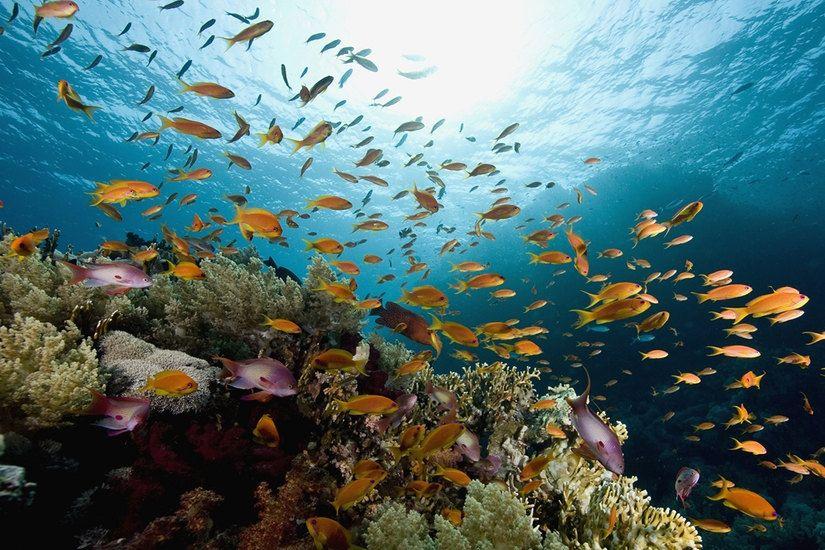 Underwater Fish Ocean World Large Wall Mural, Self