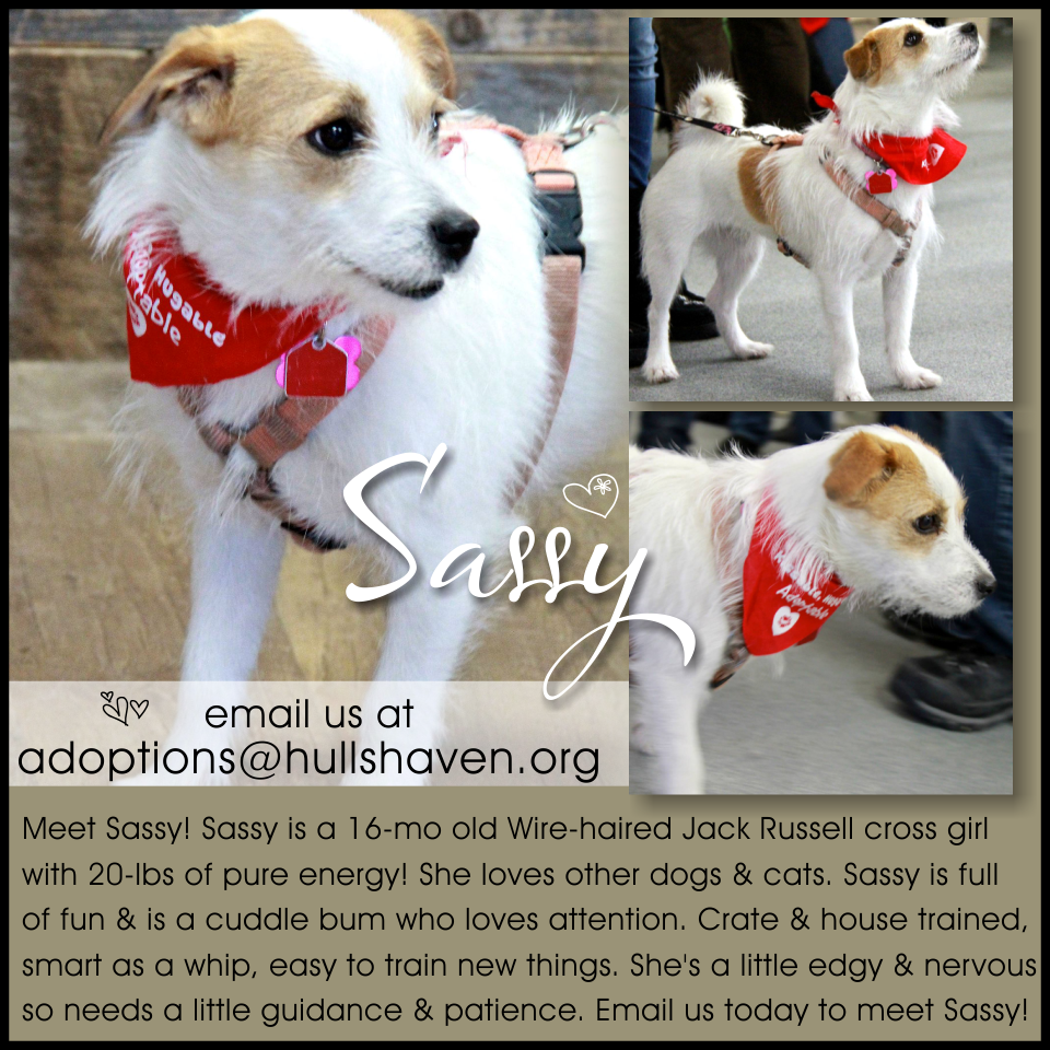 Awesome Sassy Is Loads Of Fun And Ready For Her Forever Home Happy Dogs Dogs Jack Russell
