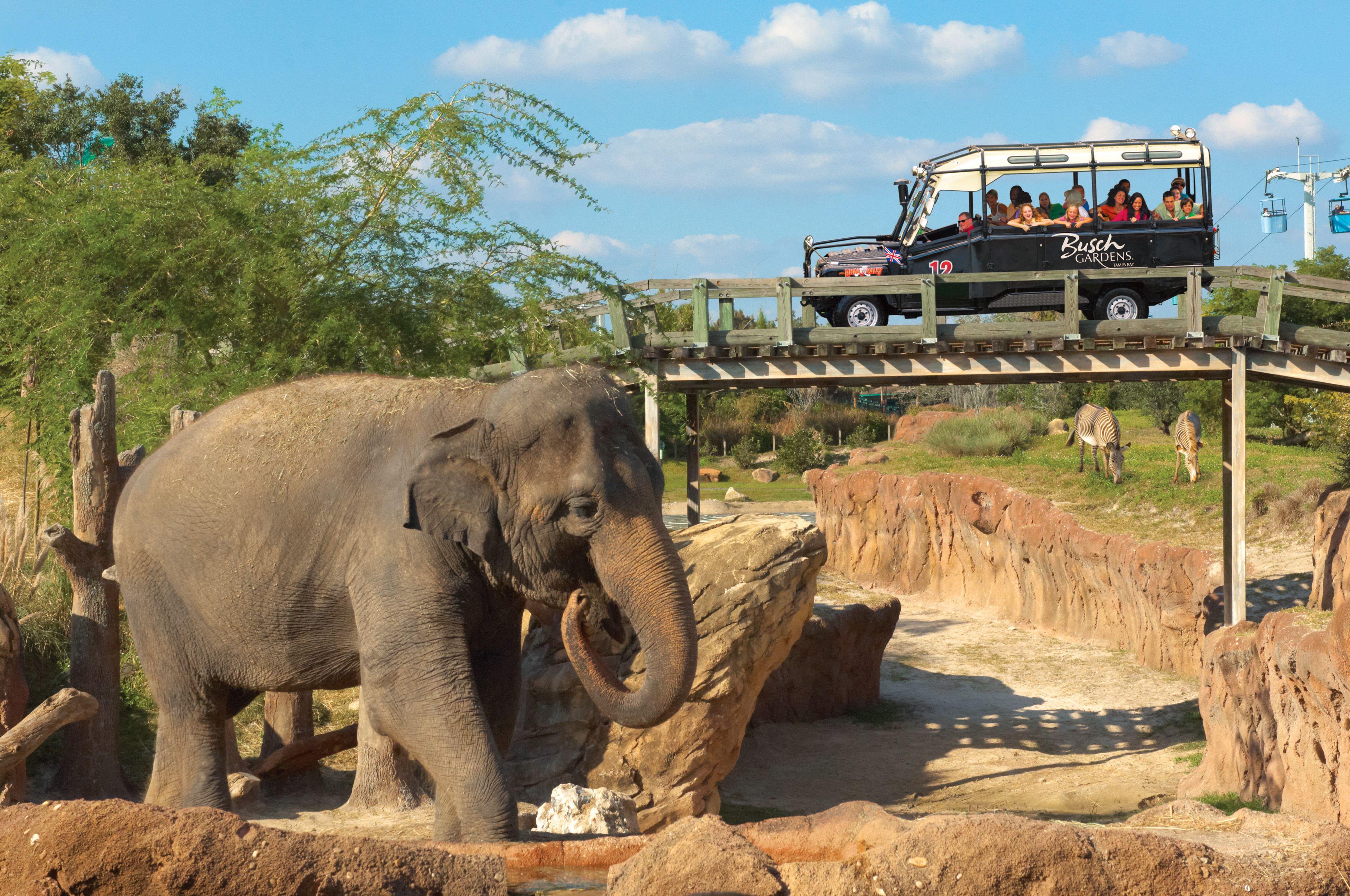 Busch Gardens | Busch Gardens | Pinterest