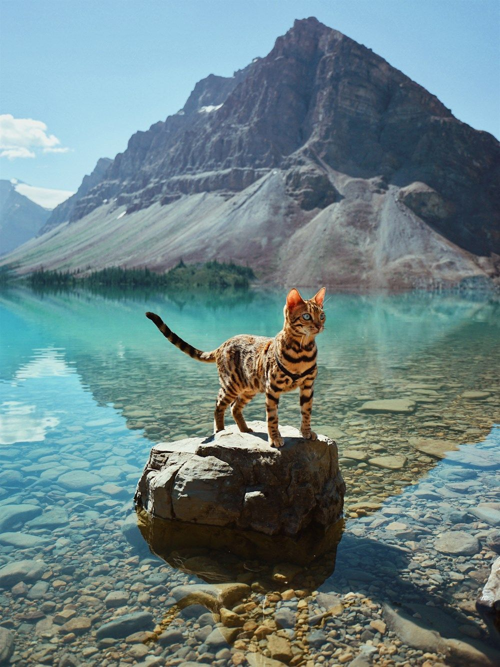 These Breathtaking Photos Of Suki The Adventurous Bengal Cat Will Fill You With Traveling Spirit Bengal Cat Pretty Cats Cat Pose
