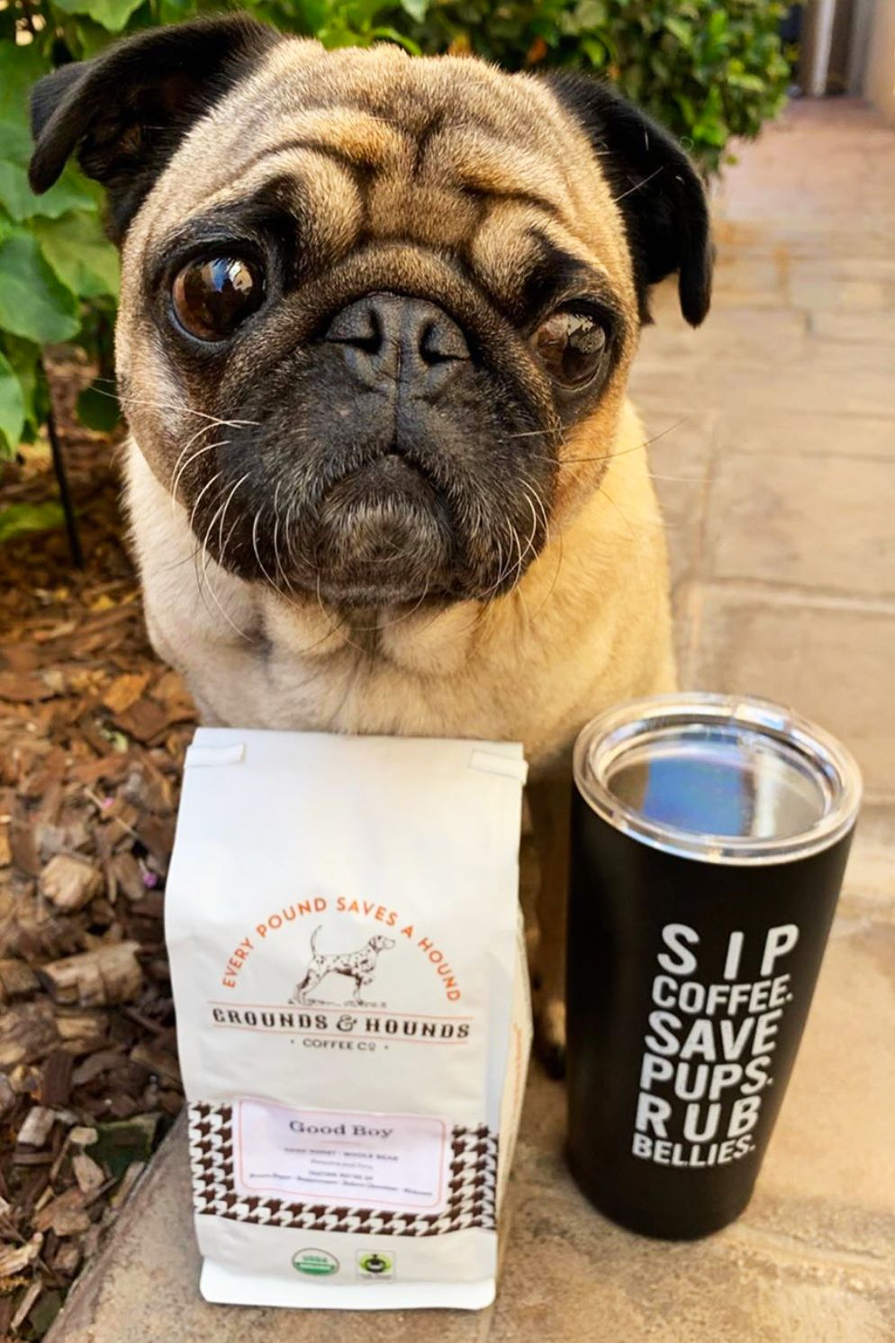 Belly Rub Motto 20 Oz Tumbler Tumbler Pug Rescue Pugs