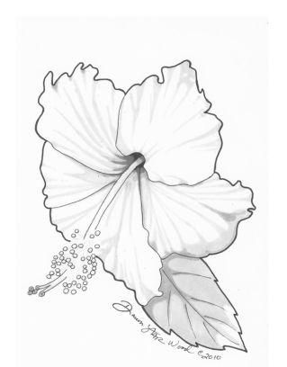 Hibiscus drawing google search