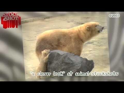Classic Videoclip - Polar Bear & baby - IJsbeer & baby - YouTube