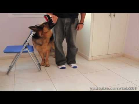 How To Teach The Perfect Recall Dog Clicker Training Dog
