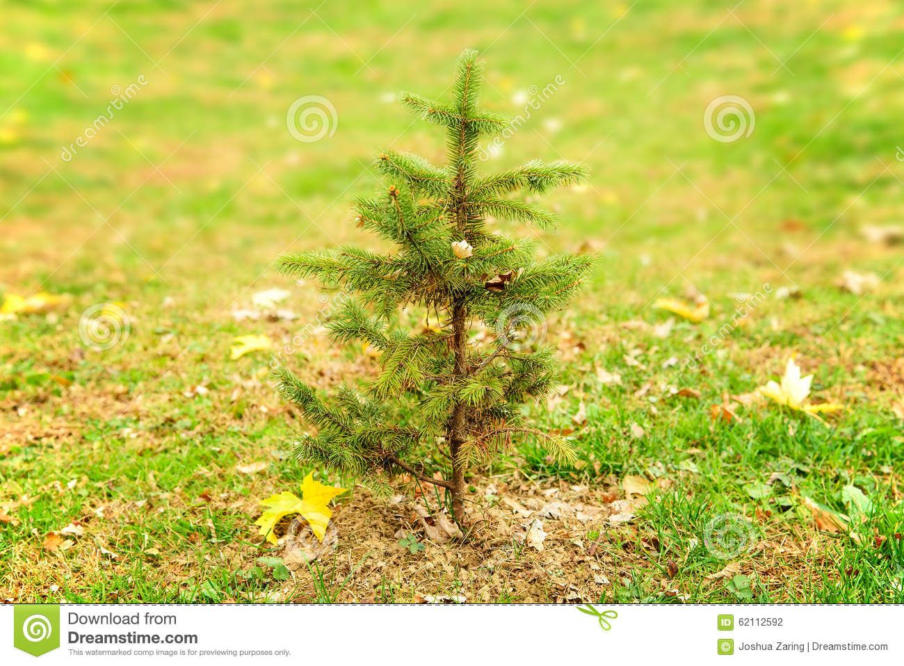 Small Pine Tree Alone In Field Download From Over 45 Million