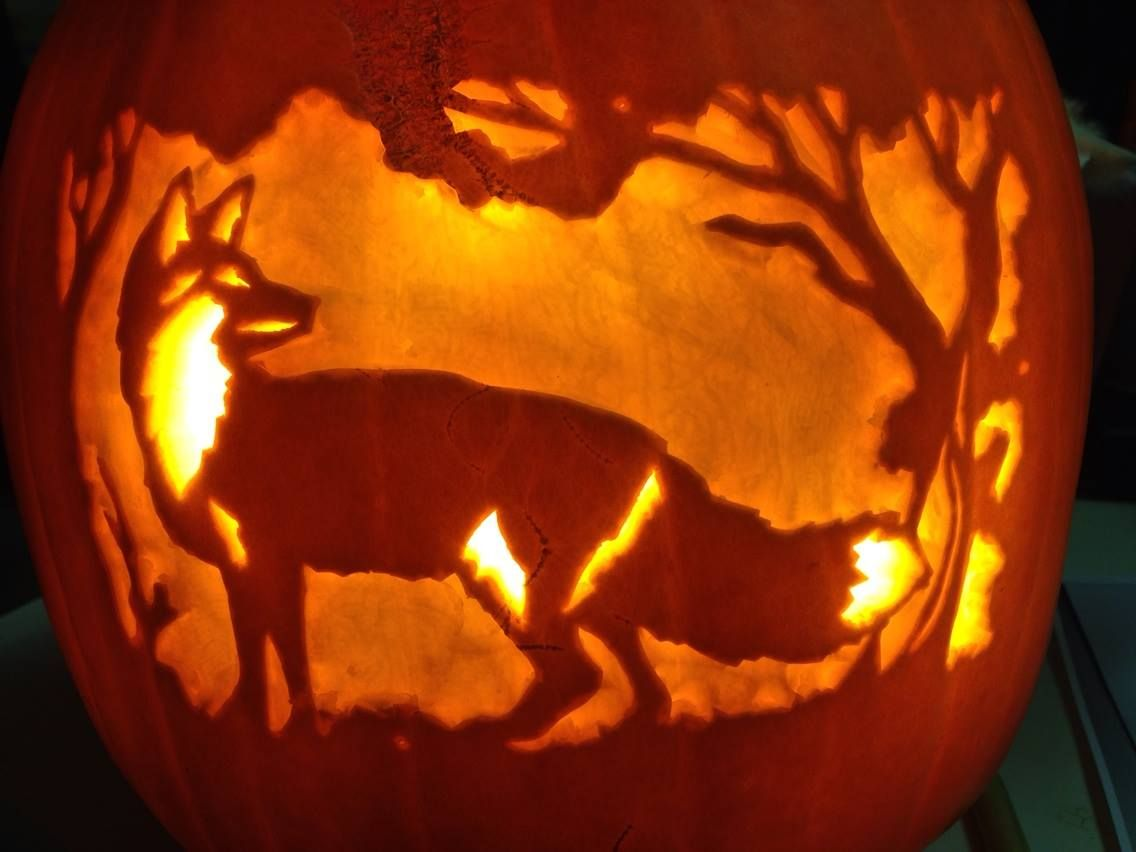 Maybe This Will Be Our Halloween Pumpkin Need To Put My Mad Carving Skills To Test Fox